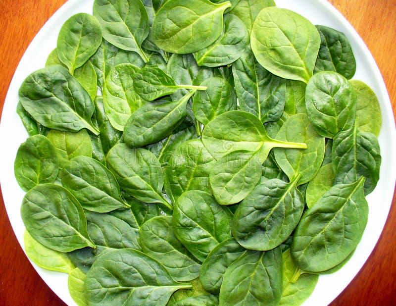 Fresh spinach stock photos