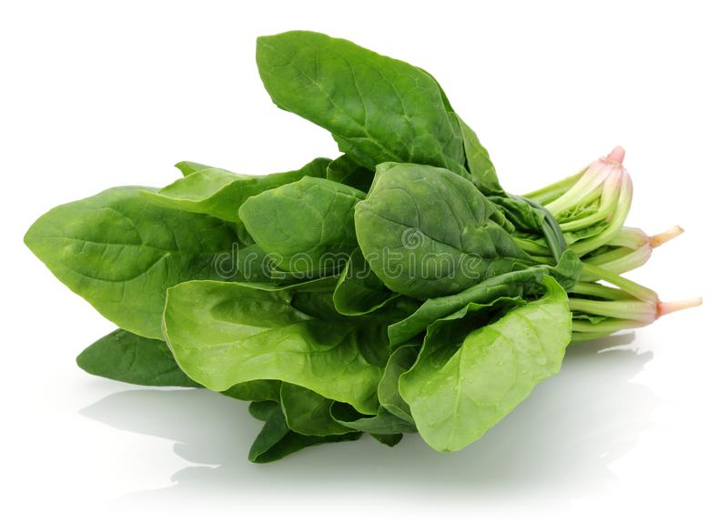 Fresh spinach isolated on white royalty free stock photography