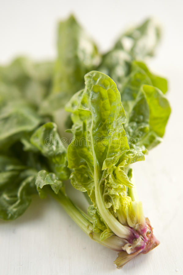 Download Fresh Spinach Leaves stock photo. Image of green, healthy - 20134822