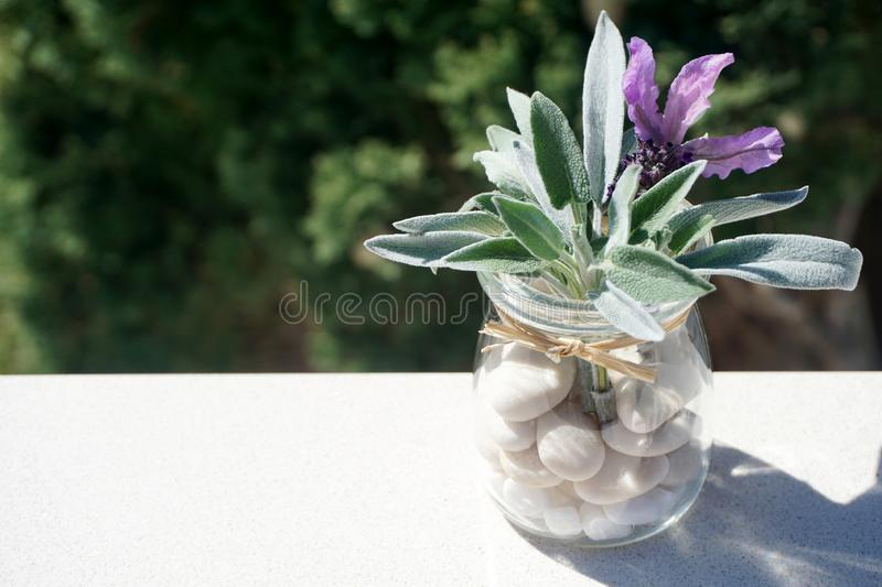 Fresh spring aromatic plants, lavender and sage in glass jar with pebbles. Fresh herbal spring aromatic plants, lavender and sage in glass jar with pebbles stock image