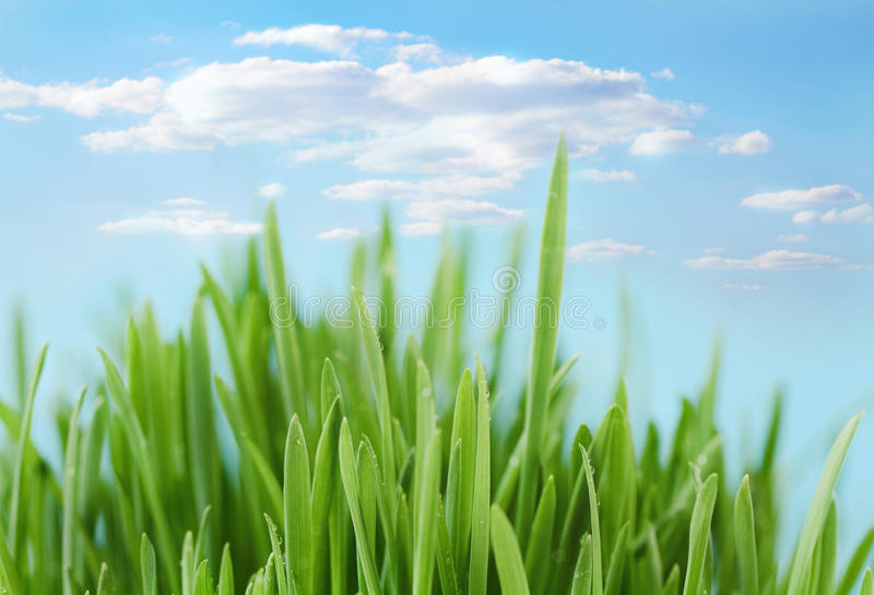 Download Fresh Spring Bokeh Abstract Background Stock Illustration - Illustration: 23446815