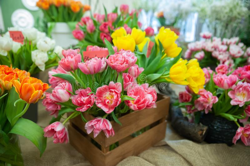 Fresh spring colorful tulip flowers card. Lot of multicolored tulips bouquets. Hello Spring and Woman day stock images