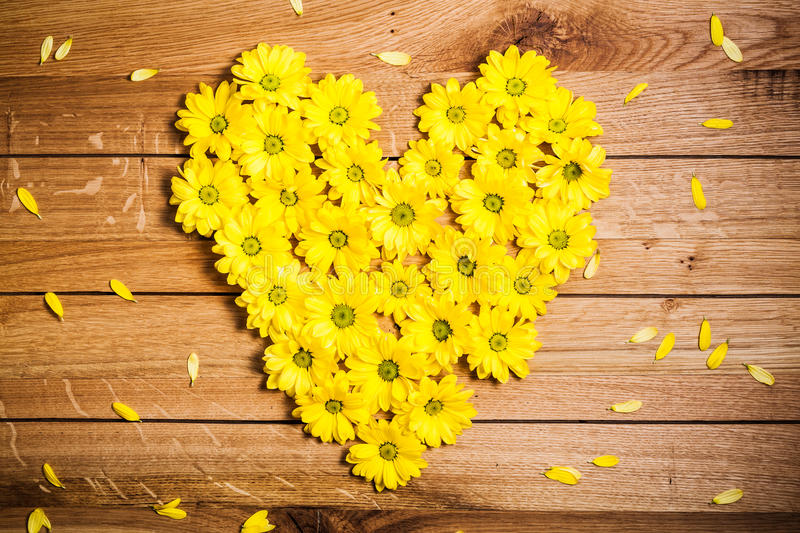 Fresh spring flowers in heart shape among petals on rustic grunge wood. royalty free stock photography