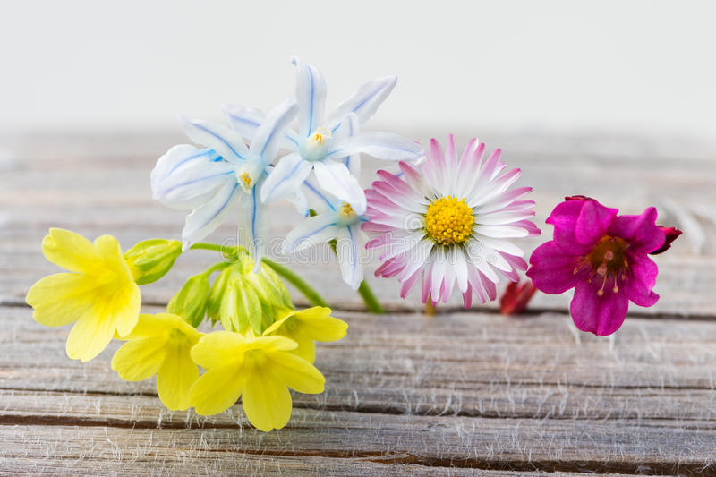 Fresh spring flowers on wood stock image image of blossom flowers download fresh spring flowers on wood stock image image of blossom flowers 69314687 mightylinksfo