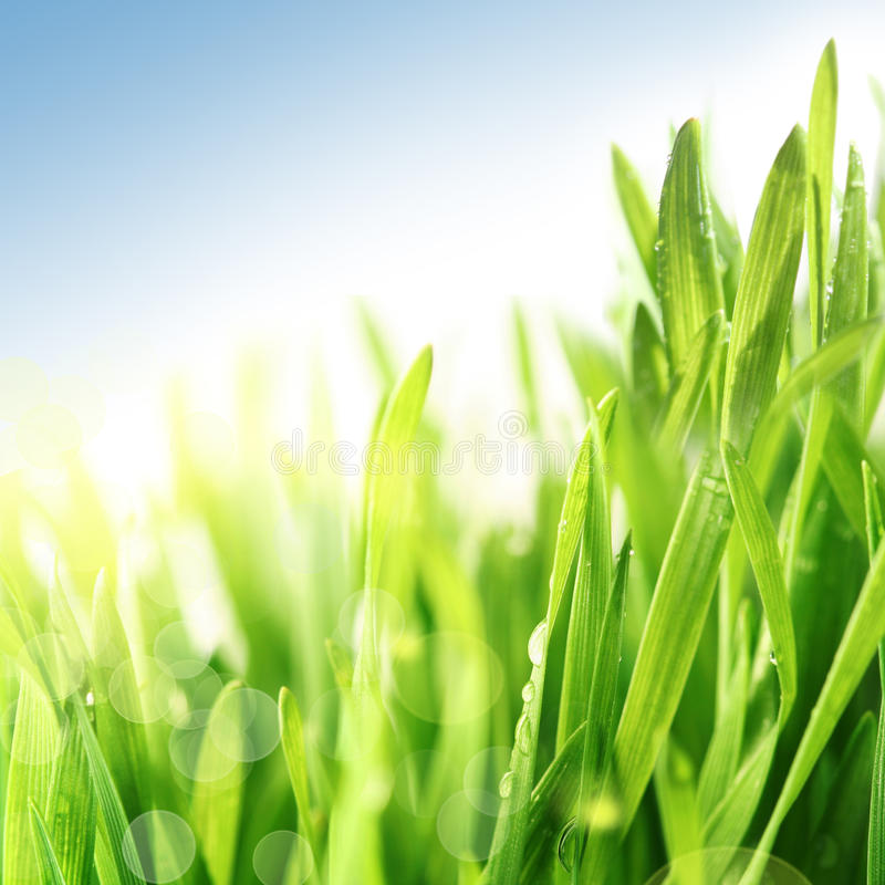 Fresh spring grass royalty free stock photography