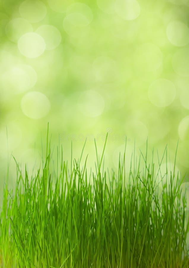 Download Fresh spring grass stock image. Image of close, bokeh - 23980099