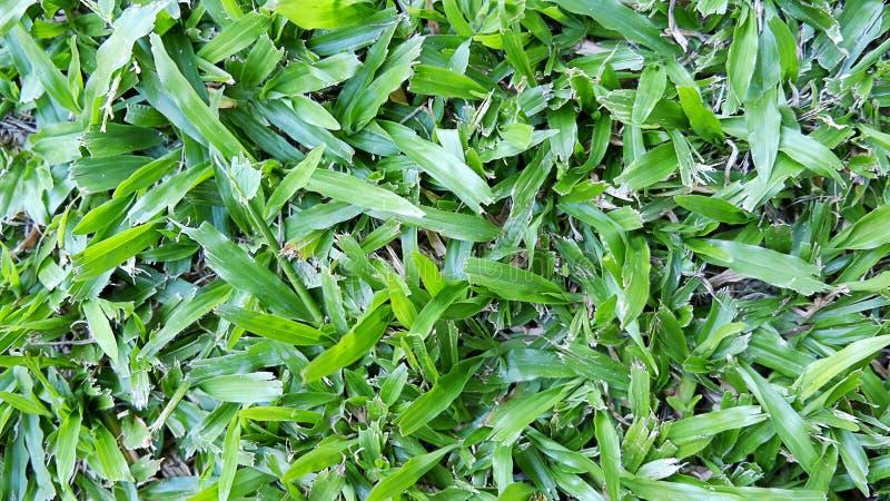 Fresh spring green grass. stock image
