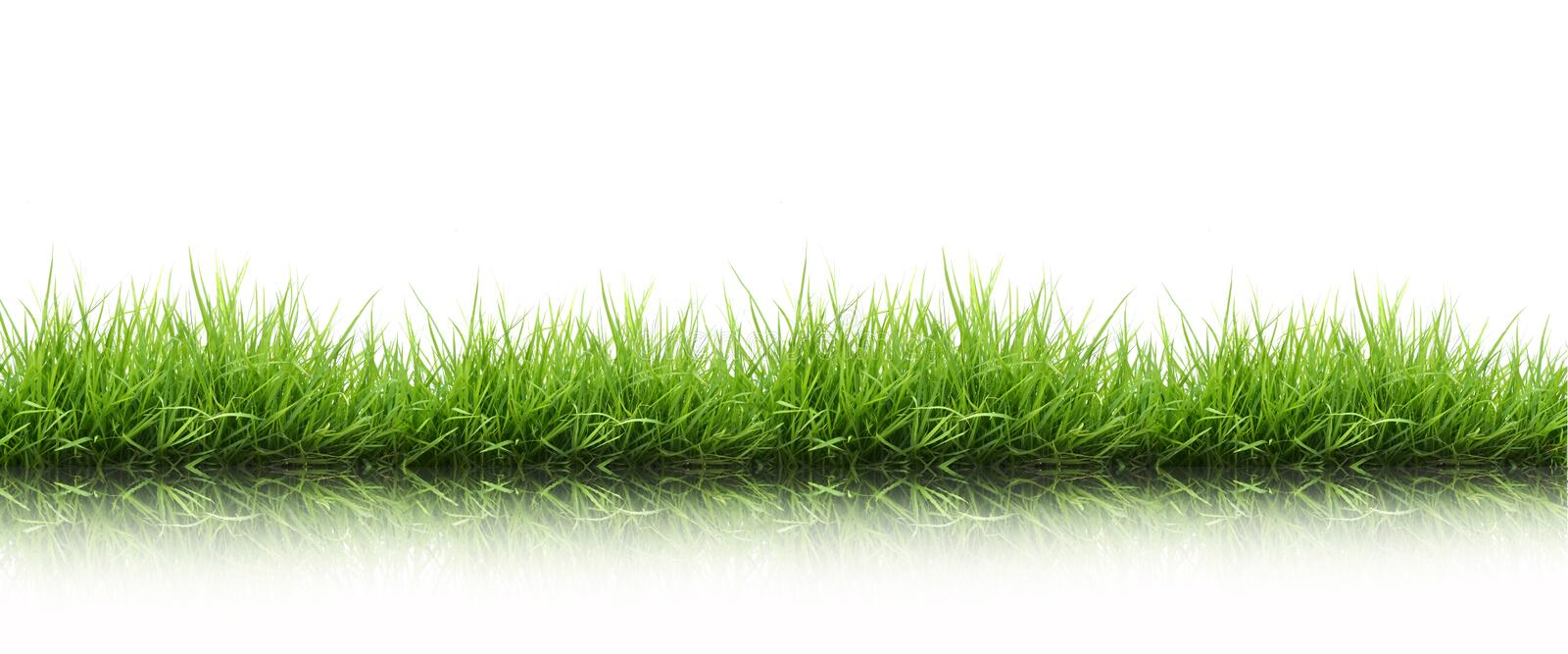 Fresh spring green grass isolated royalty free stock images