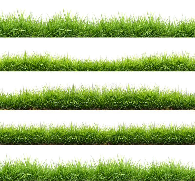 Fresh spring green grass isolated stock photos