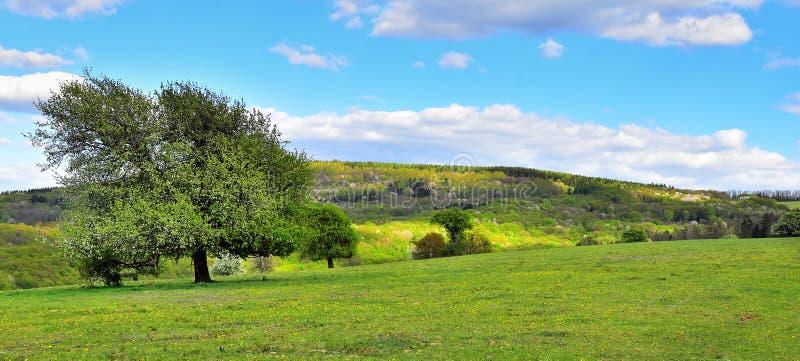 spring landscape nature stock photo