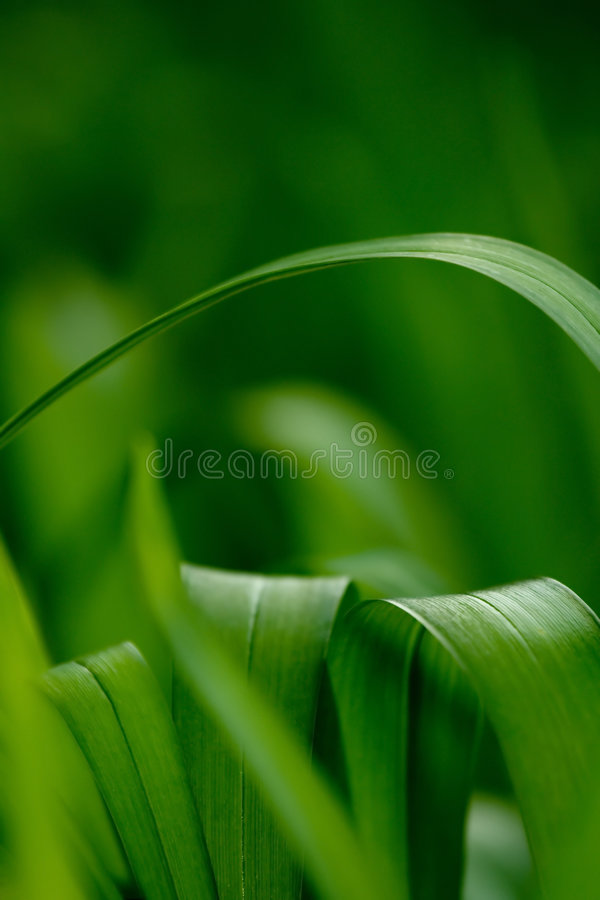 Fresh spring leaves royalty free stock image