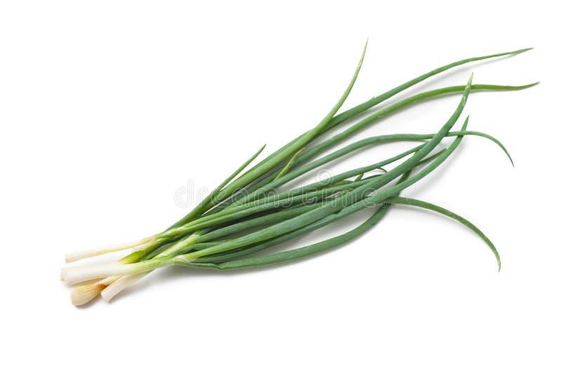 Fresh spring onions stock photo
