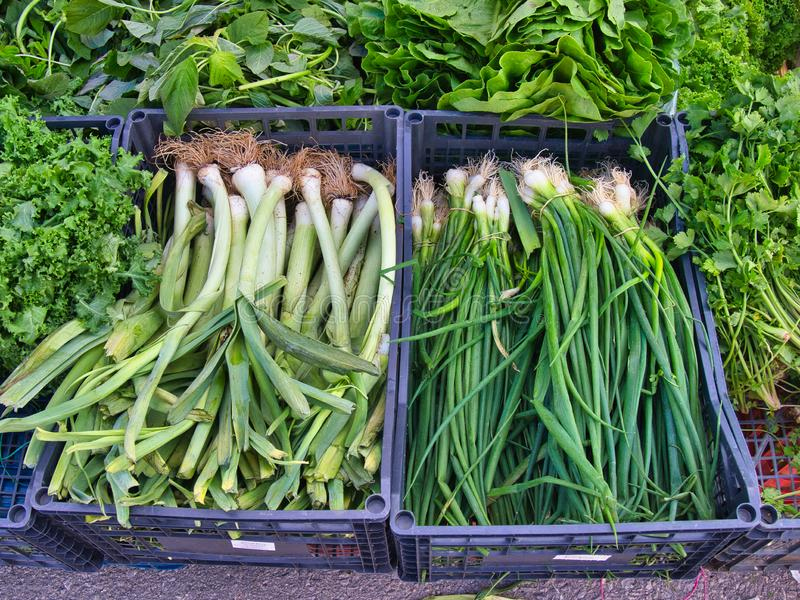 Fresh Spring Onions and Shallots in Crates at Market stock image