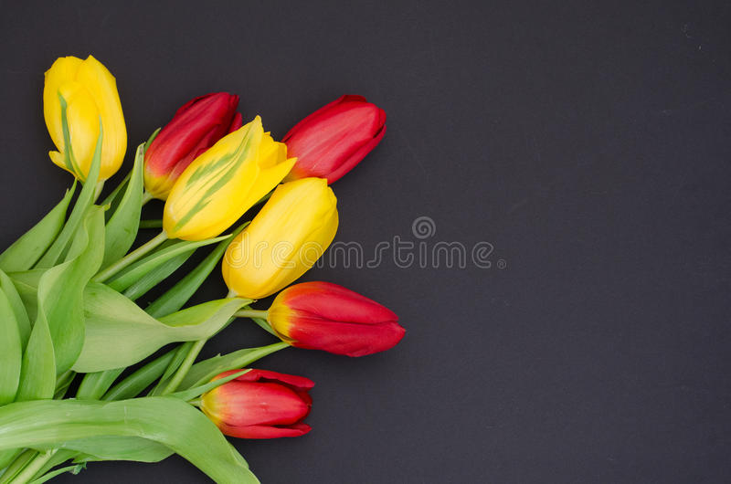 Fresh spring red and yellow tulip bouquet flowers closeup macro in the lower left corner on black background top view w royalty free stock photography