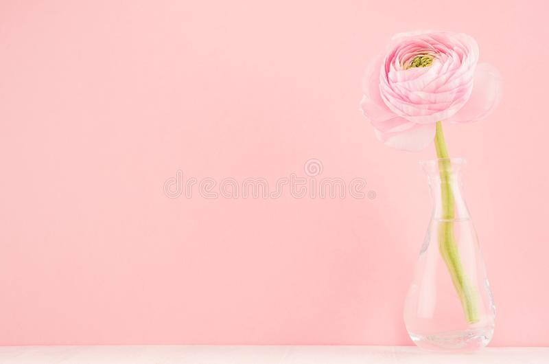 Fresh spring soft light romantic buttercup flower in exquisite glass vase on white wood table and pastel pink color background. stock images