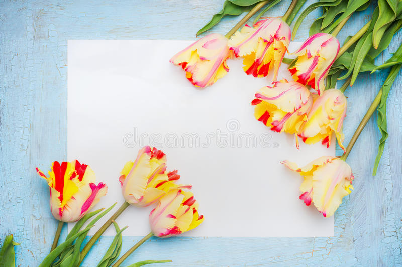 Fresh spring tulips with blank paper card on blue wooden background, top view, frame. royalty free stock photography
