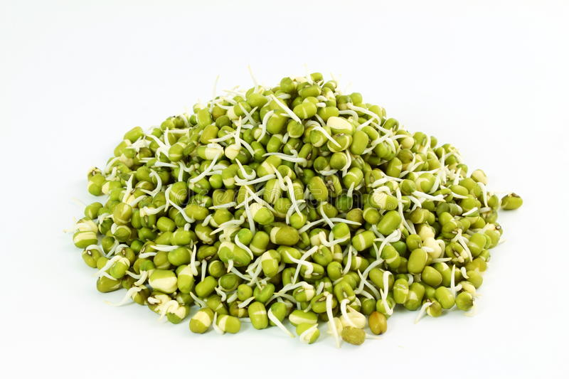 Fresh Sprouted mung beans or green gram beans in white background. For cooking food health healthcare garden related work stock photos