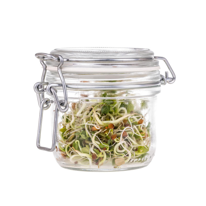 Free Fresh Sprouts Stock Images - 62234674