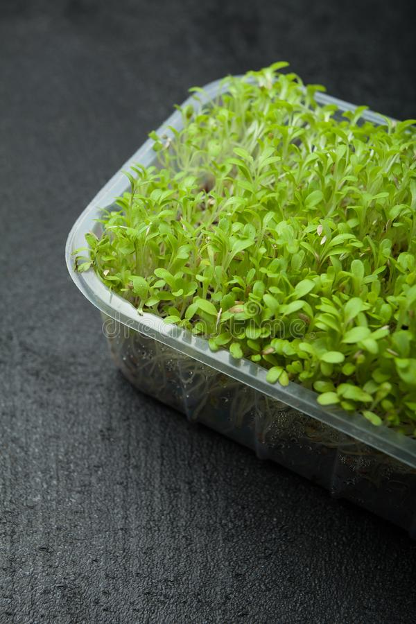 Fresh sprouts of micro-green for a fitness diet royalty free stock images