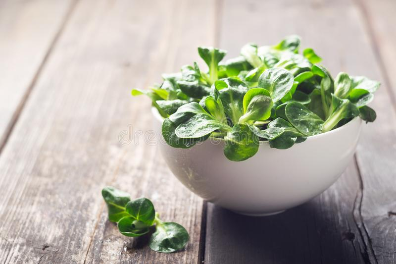 Fresh sprouts of a young green salad root in a white bowl. The concept of a healthy diet. Vegetarianism. Close-up. royalty free stock photo