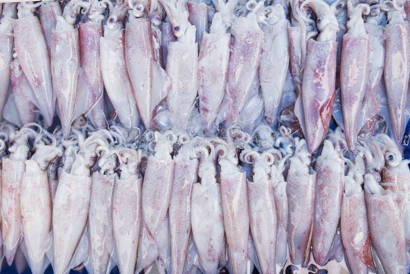 Fresh squid at fish market stock image