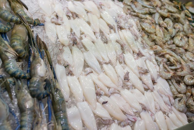 Fresh squid on the market for sale. White raw squid seafood royalty free stock images