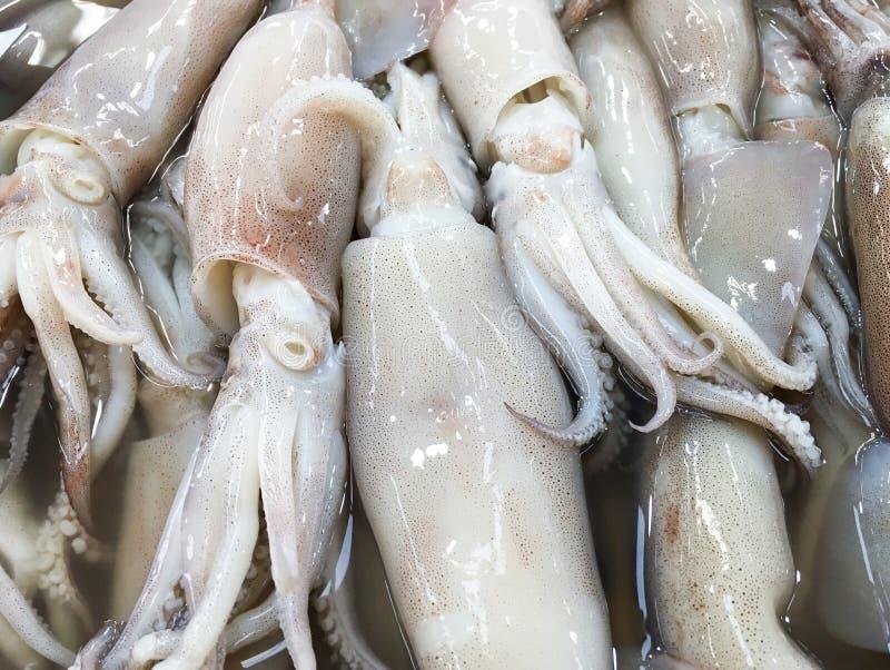 Fresh squid pile stock photo