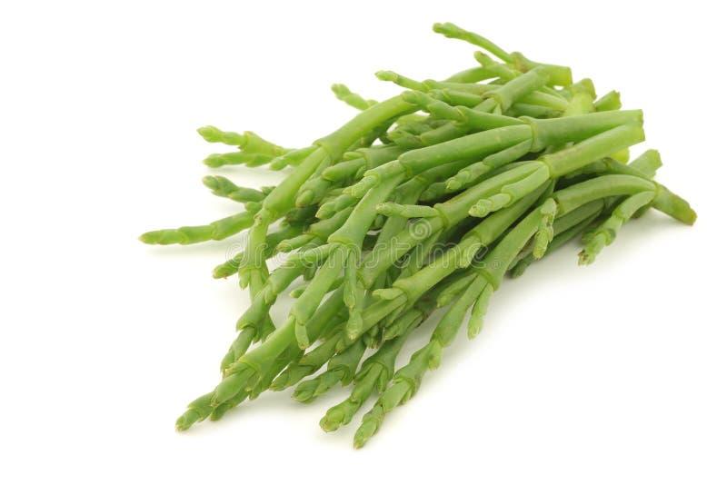 Fresh stems of Samphire stock photos