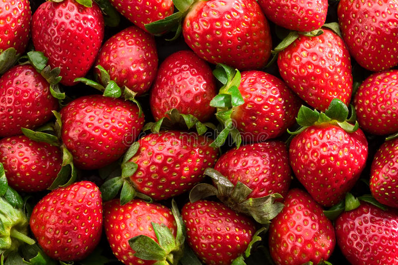 Download Fresh strawberries stock photo. Image of fresh, fruit - 14708100
