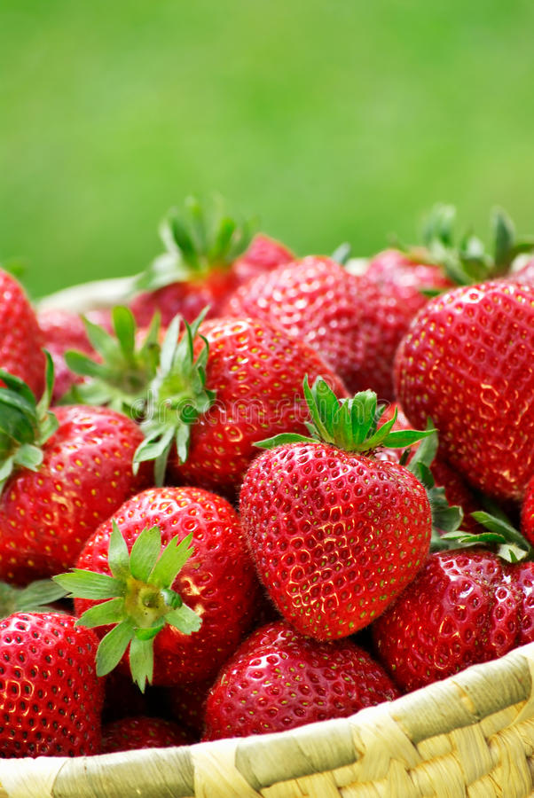 Download Fresh strawberries stock image. Image of basket, succulent - 16450529