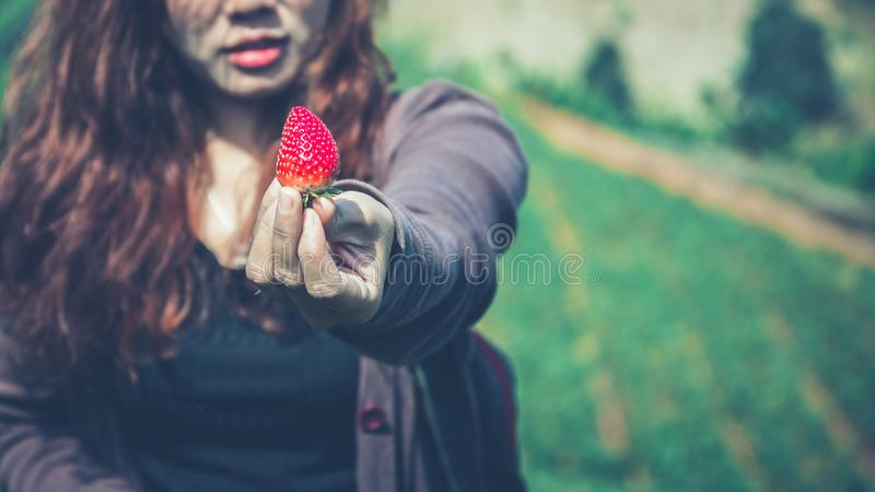 Fresh strawberries closeup. holding strawberry in hands stock photos