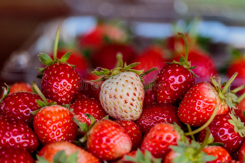 Download Fresh Strawberries On Old Table Wood. Stock Photo - Image: 83718524