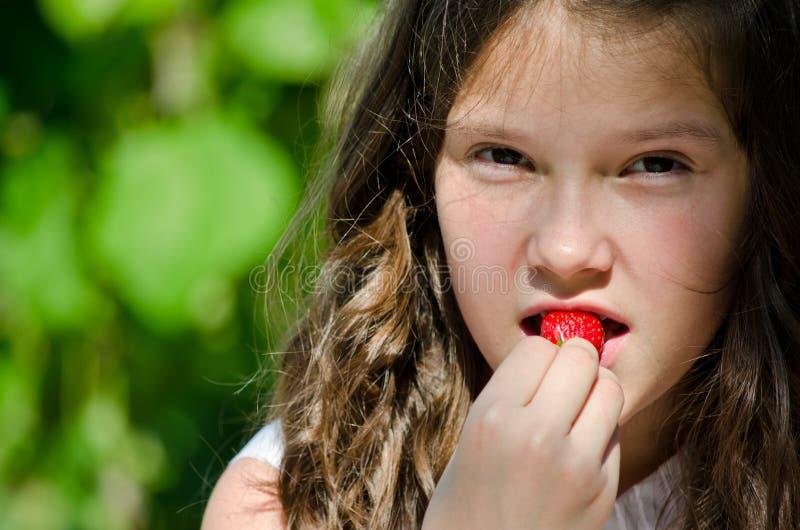 Download Fresh strawberry stock photo. Image of bite, farm, eating - 24896148