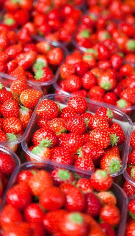 Download Fresh strawberry stock image. Image of fresh, nature - 26701539