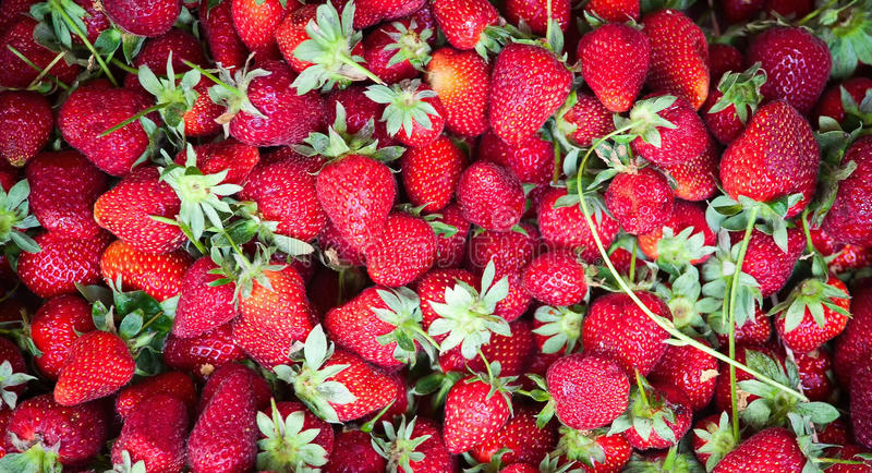 Download Fresh strawberry stock photo. Image of color, freshness - 28955178