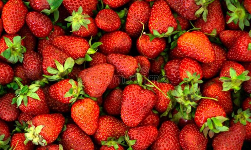 Fresh Strawberry background. Fresh organic strawberries macro. Red strawberry background royalty free stock photography