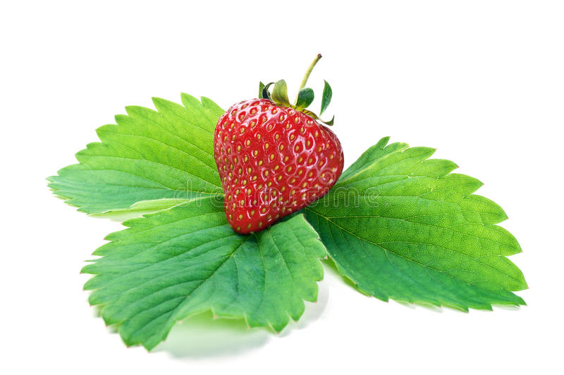Fresh strawberry on a green leaf stock photos