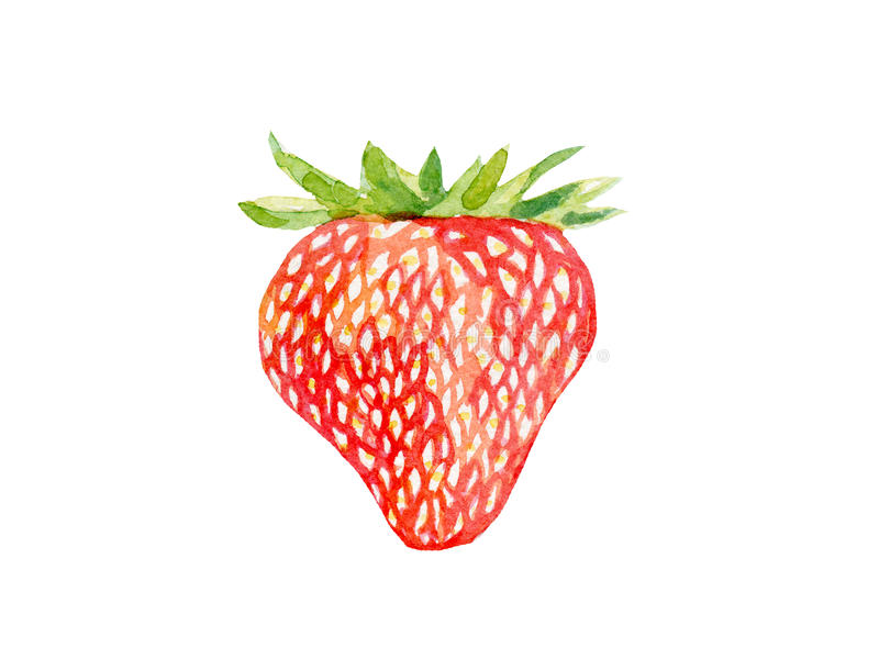 Fresh strawberry illustration. Hand drawn watercolor on white background. royalty free illustration