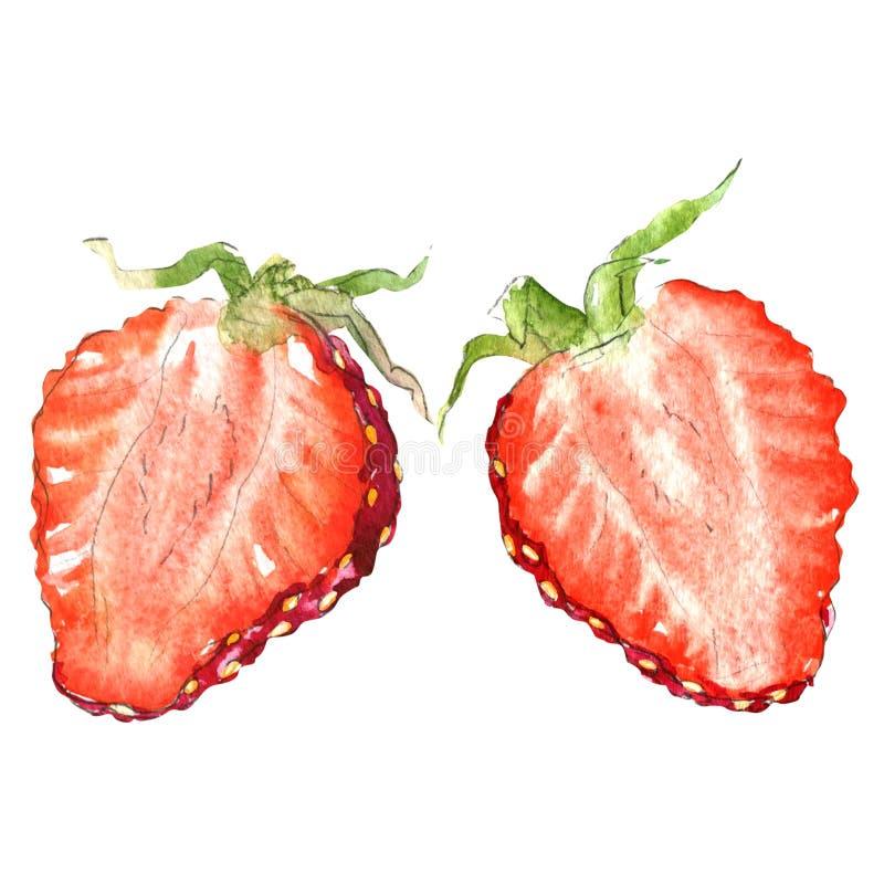 Fresh strawberry slice, half berry, isolated, watercolor illustration on white. Fresh strawberry slice, half of berry isolated, watercolor illustration on white stock illustration