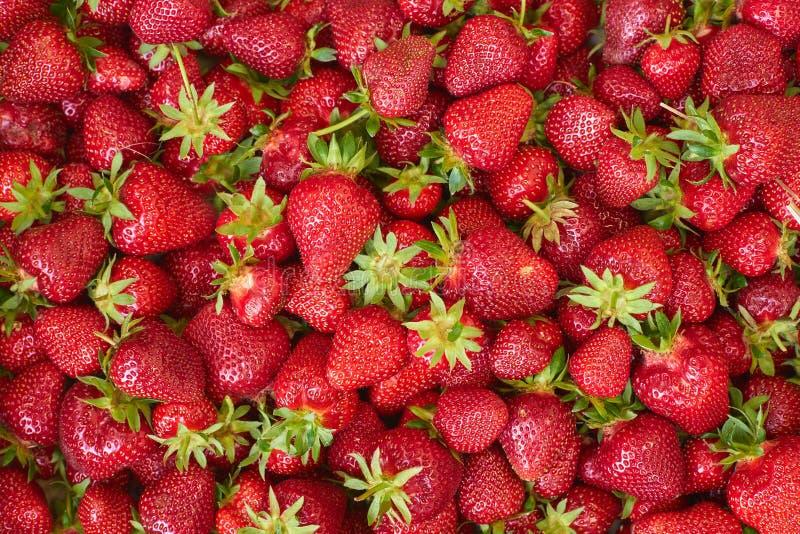 Fresh strawberrys of organic farming royalty free stock images
