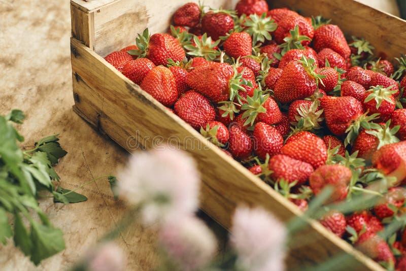 Fresh strawberrys of organic farming royalty free stock photos