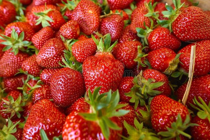 Fresh strawberrys of organic farming stock image