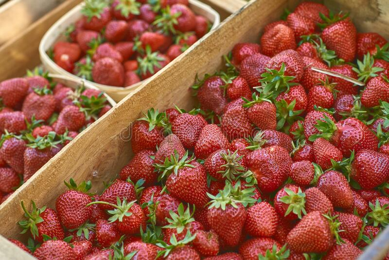 Fresh strawberrys of organic farming stock photos