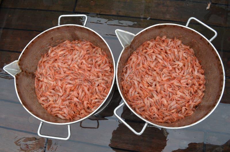 Download Fresh Striped Pink Shrimp (Pandalus Montagui) Stock Photo - Image: 25937340