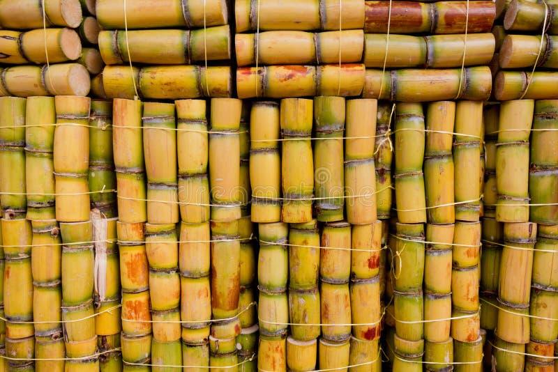 Fresh Sugarcane Royalty Free Stock Image