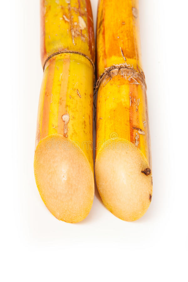 Fresh sugarcane stock photography