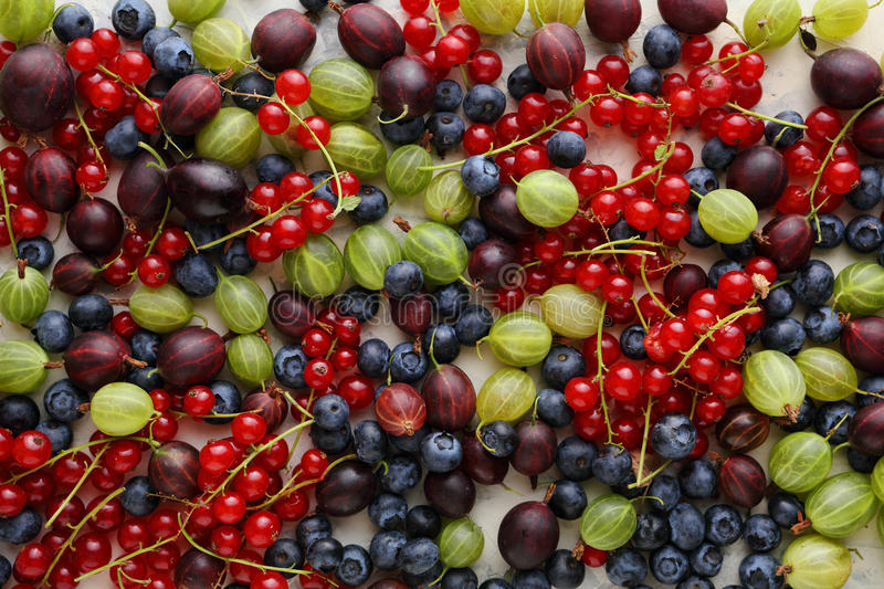 Fresh summer berries. Agriculture, harvest, diet and healthy eating concept royalty free stock photos