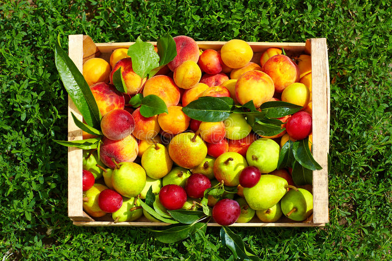 Fresh summer fruit in crate on grass stock photography