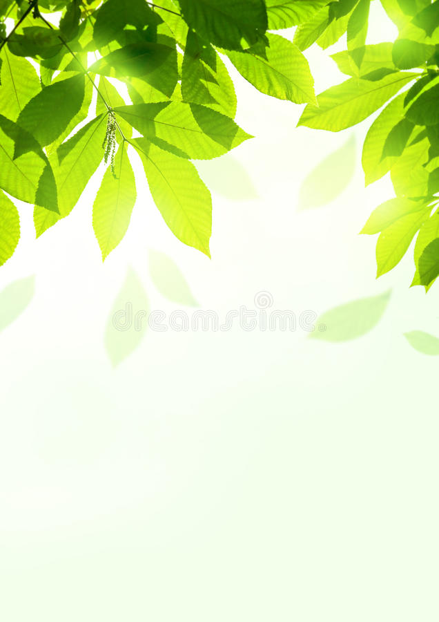 Download Fresh Summer Leaves stock image. Image of backdrop, outdoors - 34573611