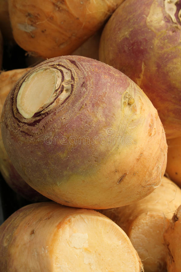 Fresh swede. Fresh British swede for sale on a market stall royalty free stock photos